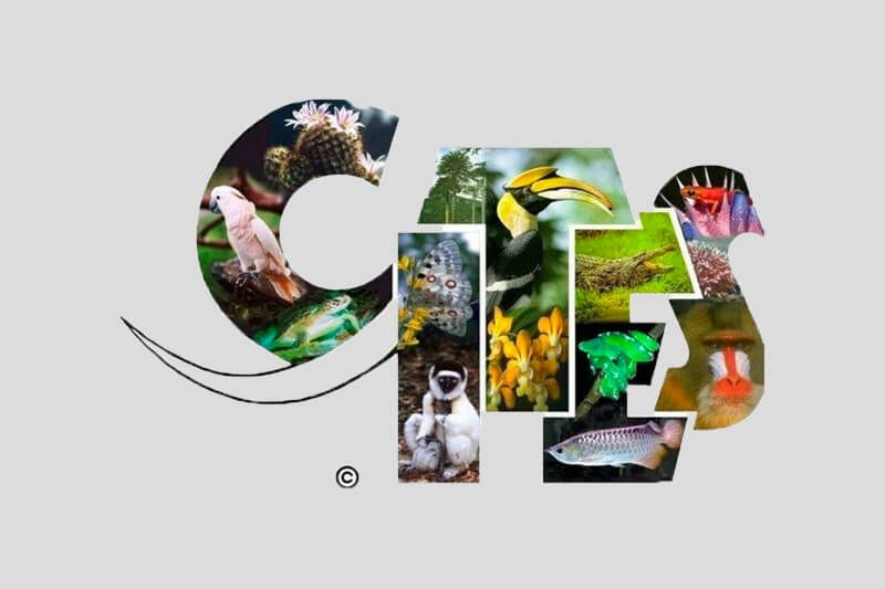 CITES Update October 2019